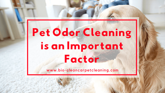 Pet Odor Cleaning is an important Factor