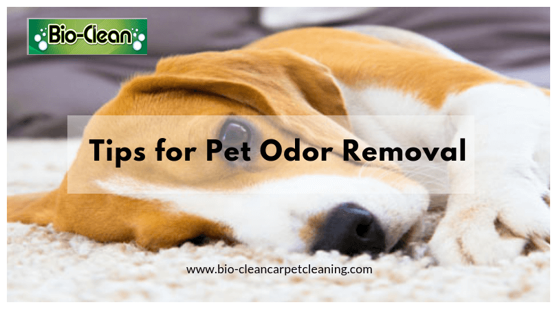 tips for pet odor removal by bo-clean