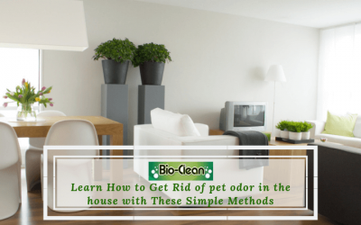 Learn How to Get Rid of pet odor in the house with These Simple Methods