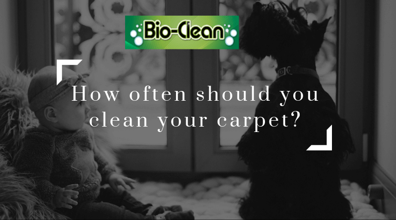 Carpet Cleaning with pets and children