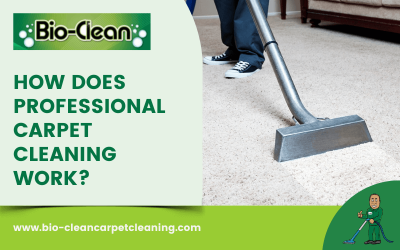 How Does Professional Carpet Cleaning Work?
