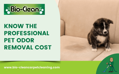 Know The Professional Pet Odor Removal Cost